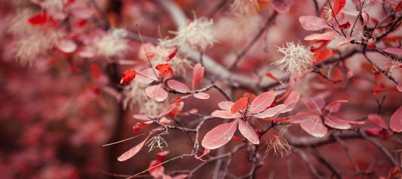 Flori și iubire de toamnă este un articol despre tinerii frumoşi și bine intenţionaţi, care au plăcerea de a dărui ceea ce sunt.