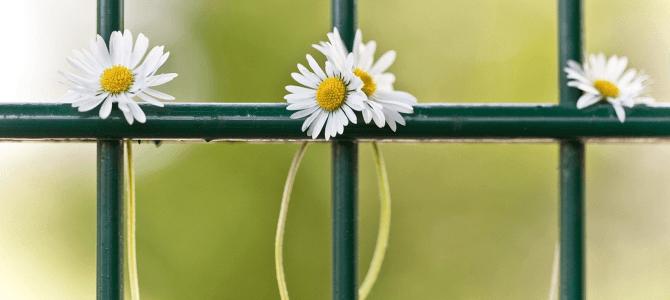 Mesaje de primăvară, sfaturi şi motivaţie
