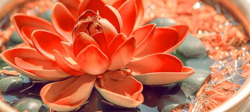 Dacă dragostea crește, nu o opri. Nu căuta justificări, obstacole sau frici ca să nu iubeşti. Nu construi ziduri între oameni.