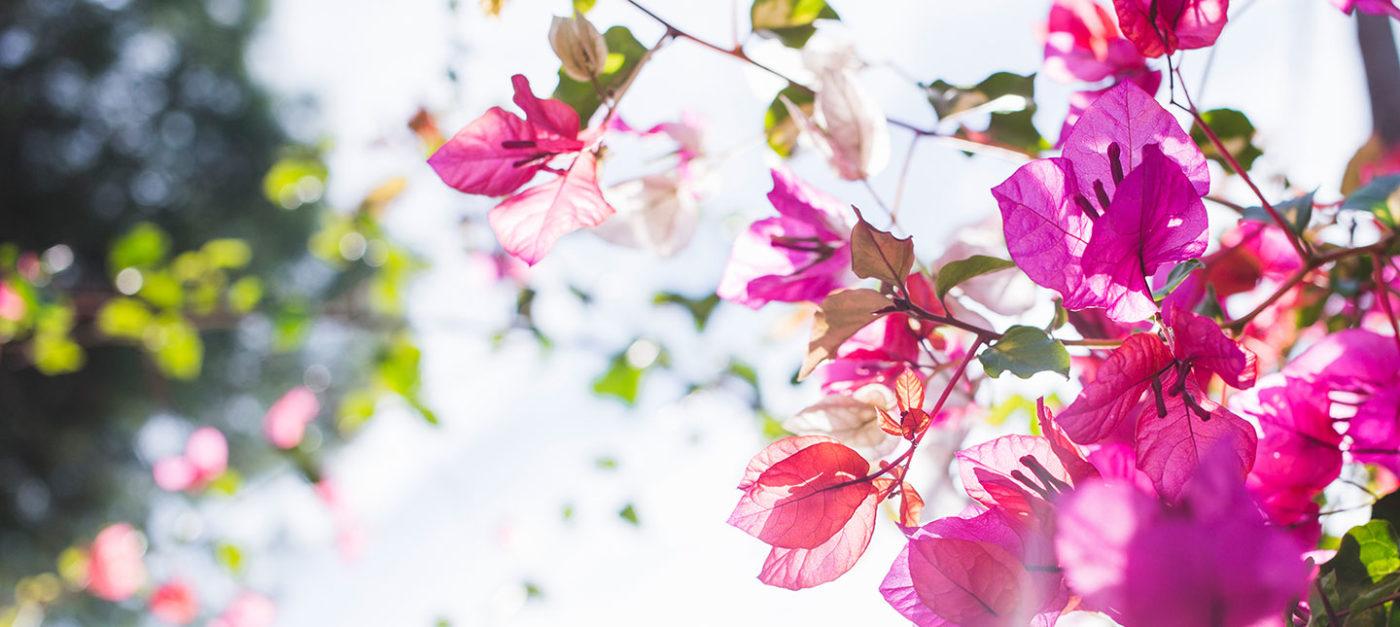 Motivaţie spirituală pentru toți este mesajul de primăvară de care avem nevoie cel mai mult.
