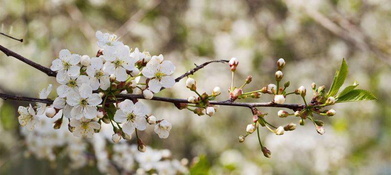 Un strop de primăvară în viața ta, o adiere parfumată, cântecul păsărilor, mirosul brazilor, glasul unui izvor care se prelinge pe pietrele verzi și le spală cu apa lui cristalină.